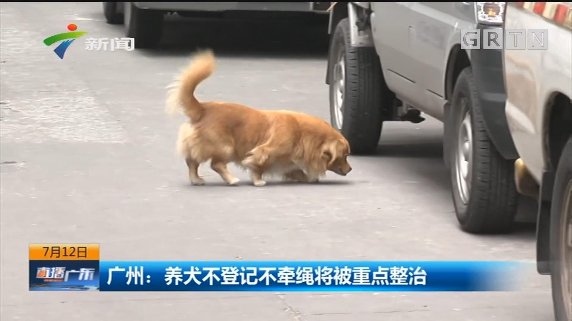 广州:养犬不登记不牵绳将被重点整治