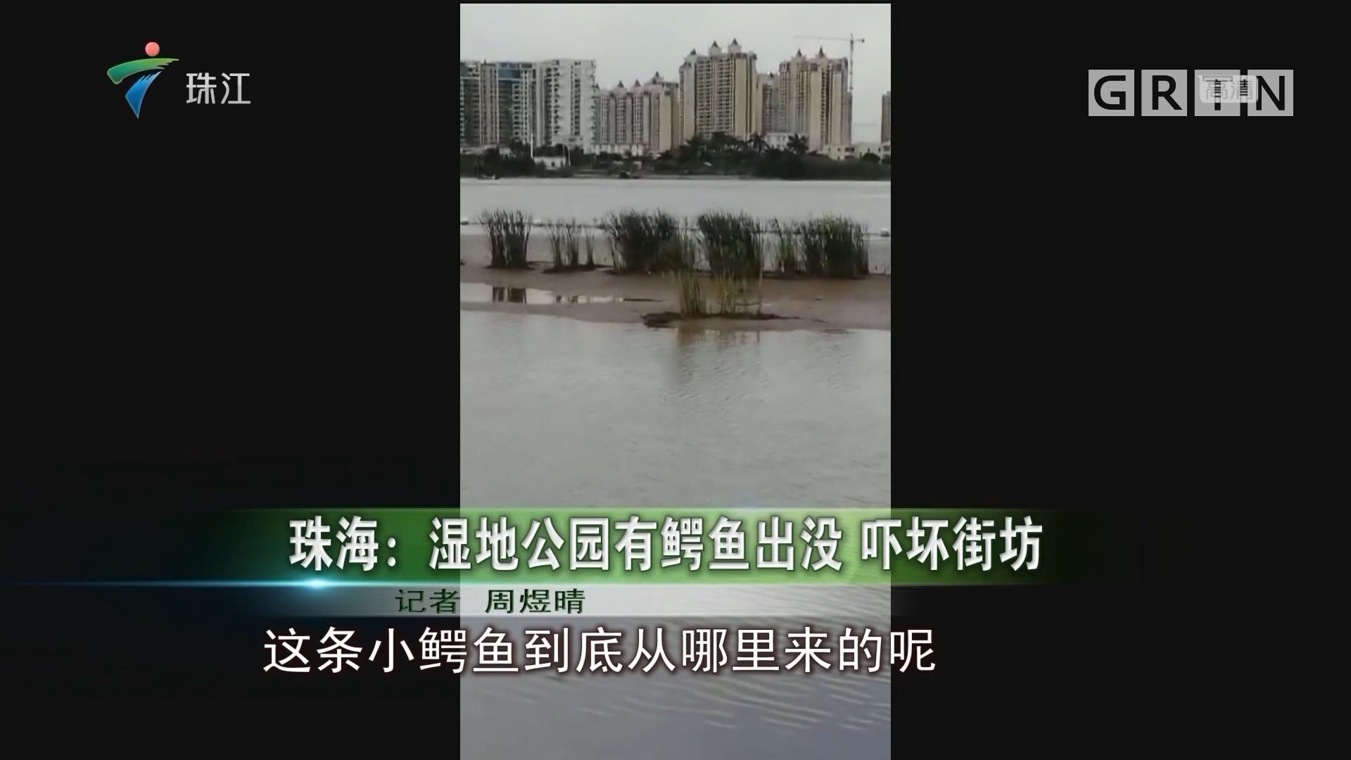 珠海:湿地公园有鳄鱼出没 吓坏街坊