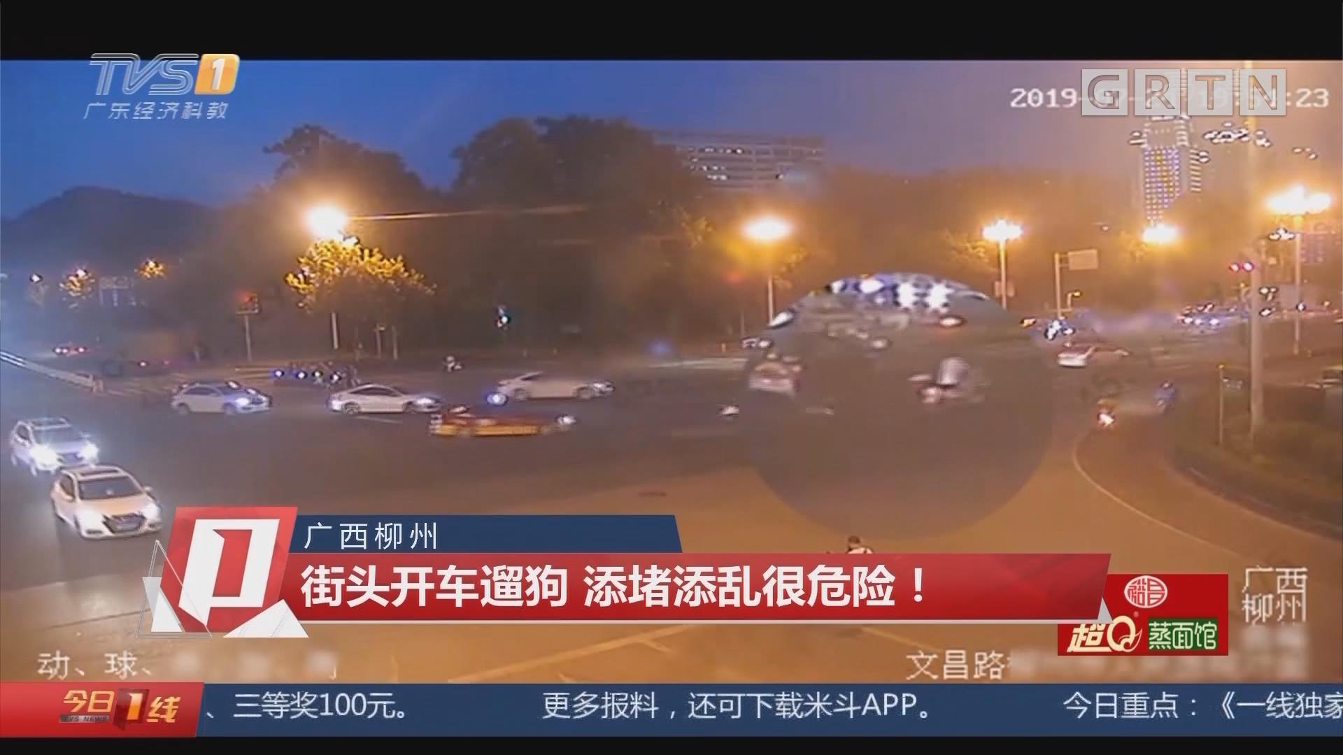 广西柳州:街头开车遛狗 添堵添乱很危险!
