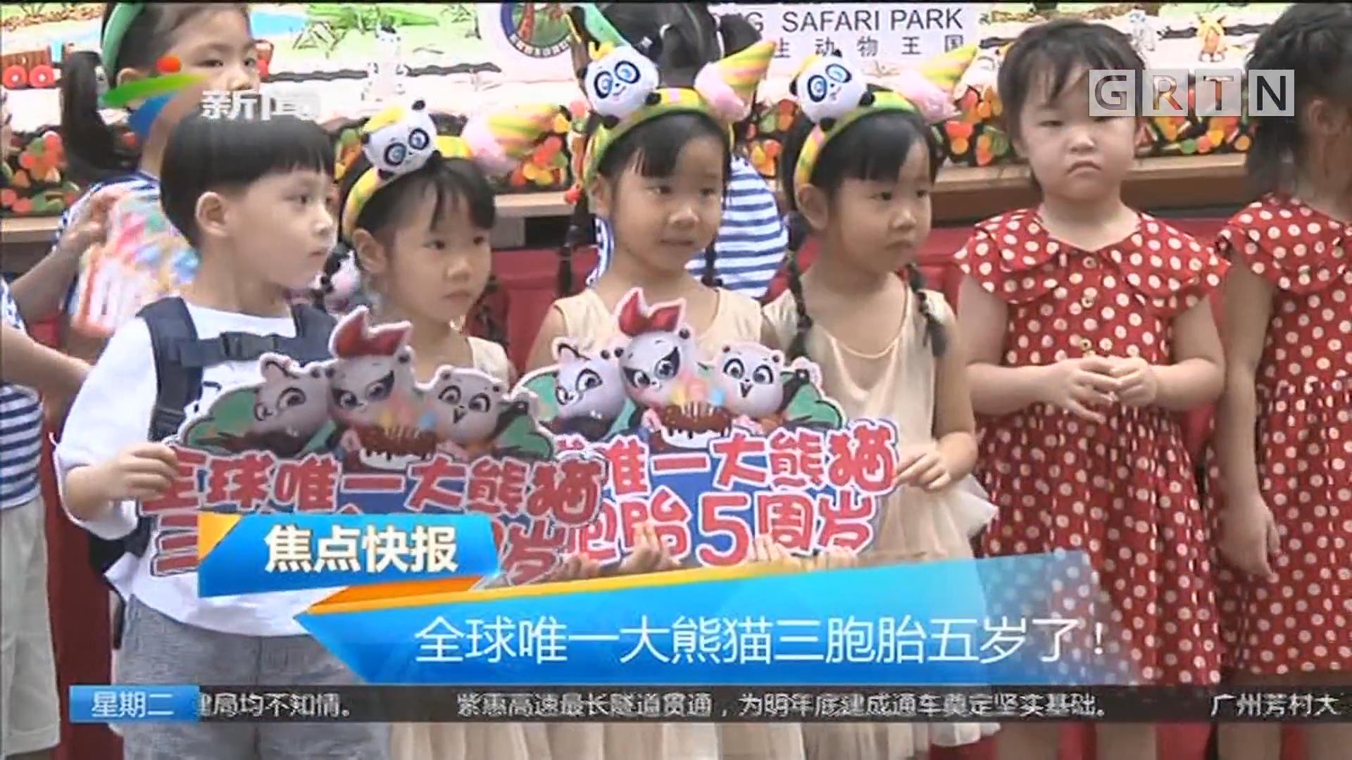 全球唯一大熊猫三胞胎五岁了!