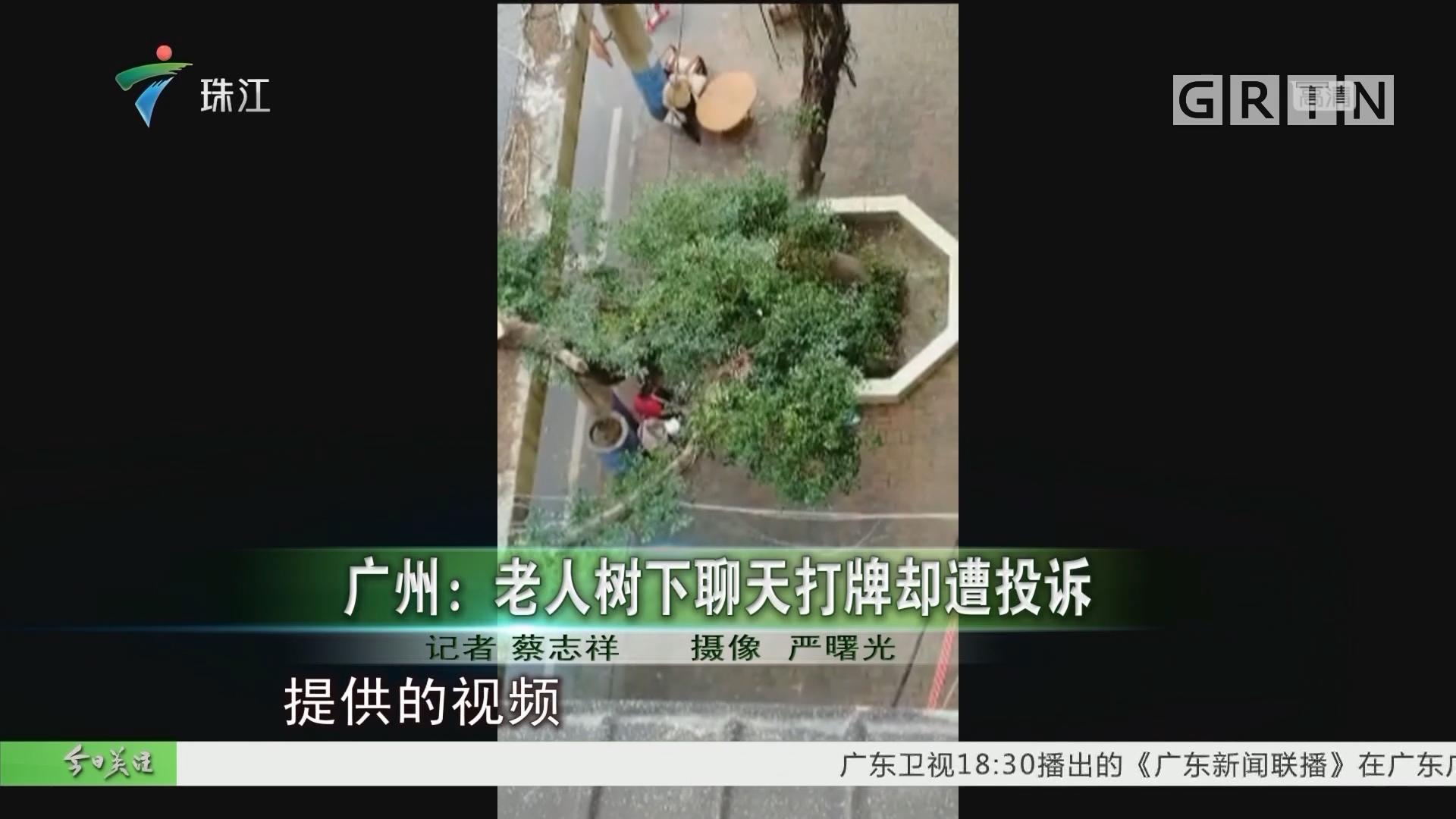 广州:老人树下聊天打牌却遭投诉