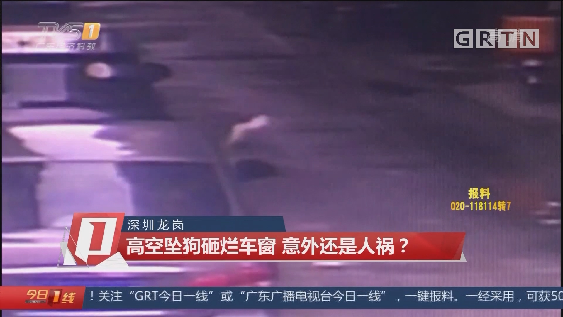 深圳龙岗:高空坠狗砸烂车窗 意外还是人祸?