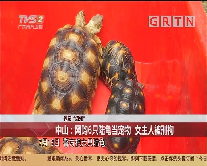 """养宠""""须知"""" 中山:网购6只陆龟当宠物 主人被刑拘"""