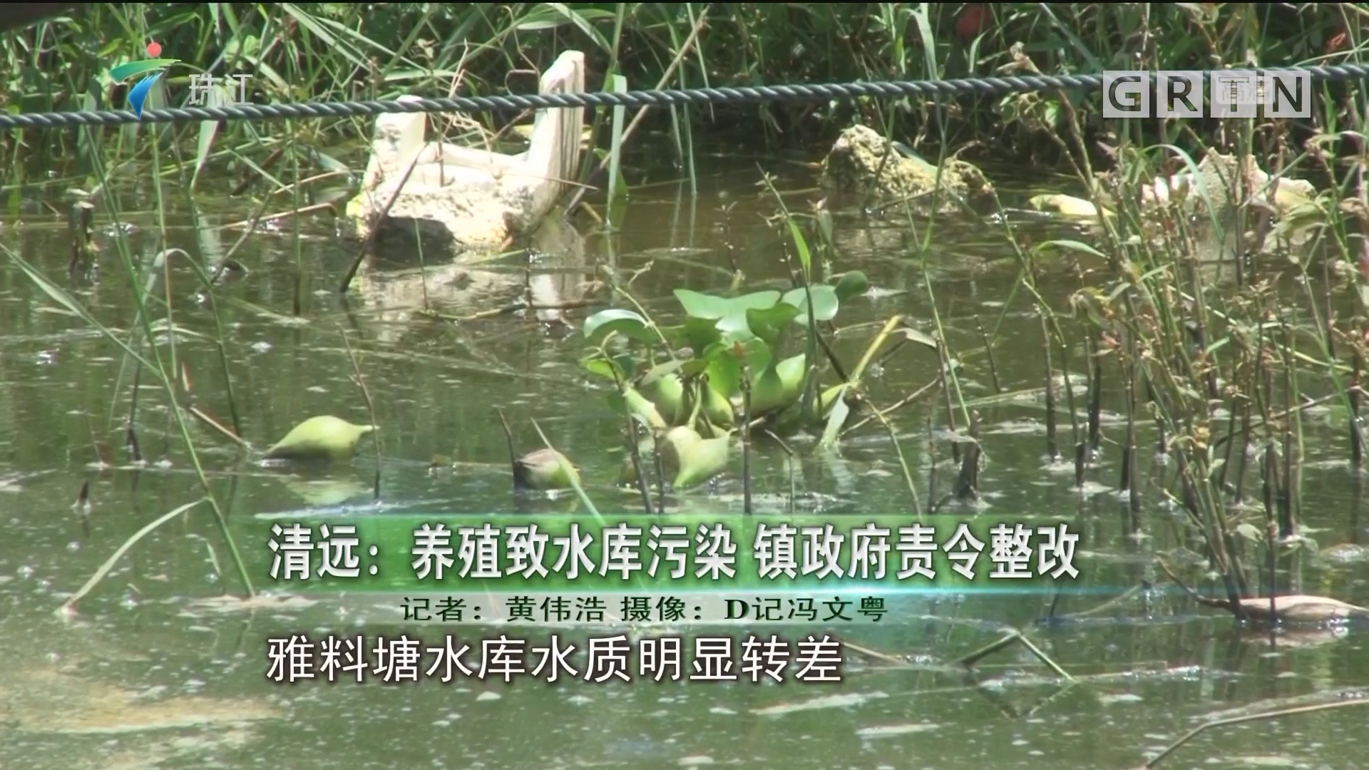 清远:养殖致水库污染 镇政府责令整改