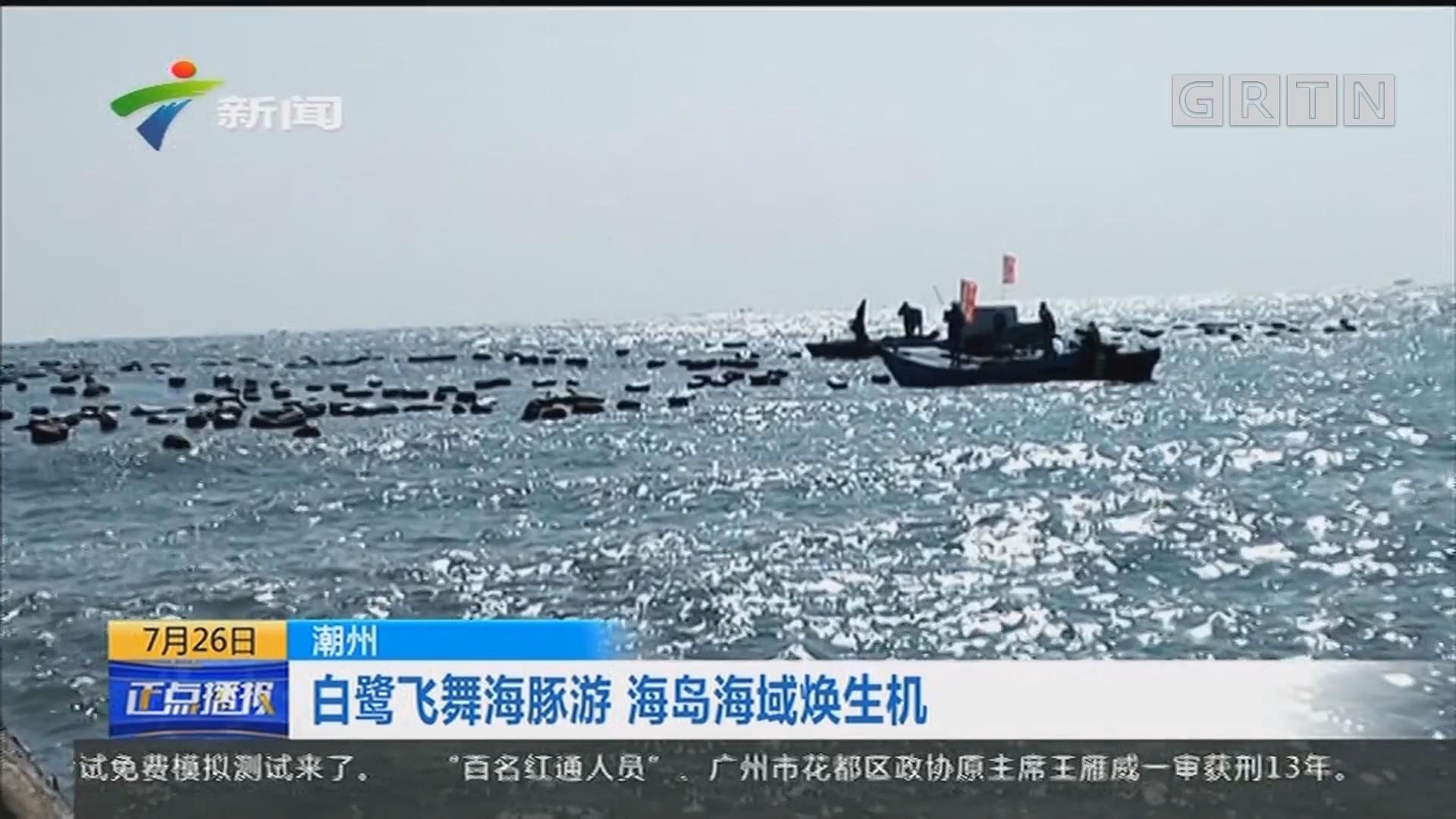 潮州:白鹭飞舞海豚游 海岛海域焕生机