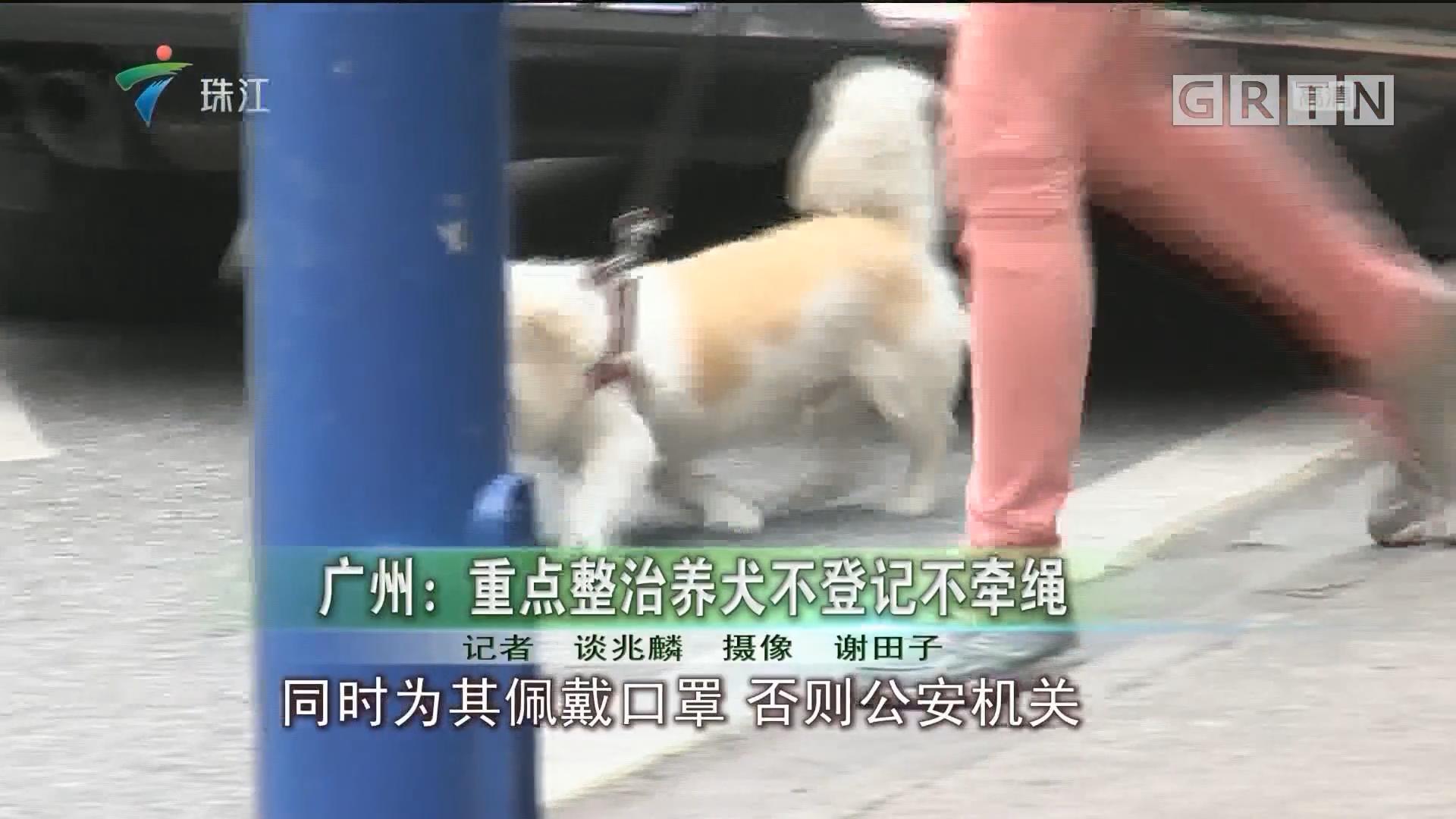 广州:重点整治养犬不登记不牵绳