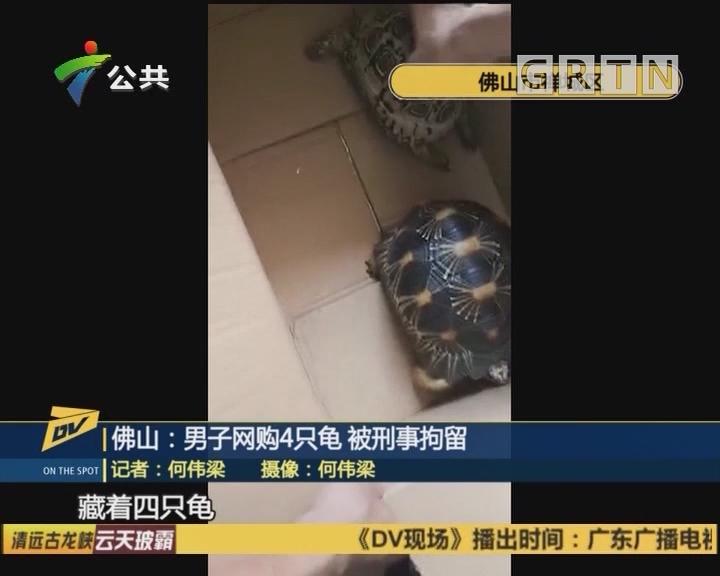 佛山:男子網購4只龜 被刑事拘留