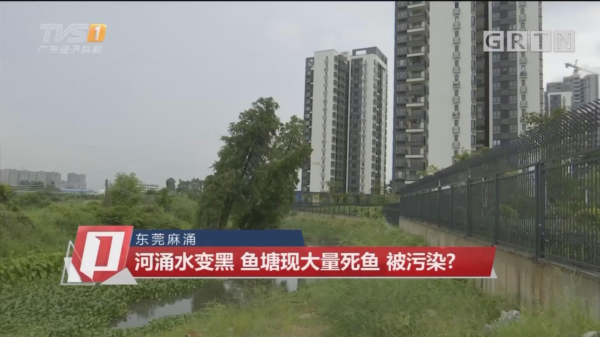 东莞麻涌:河涌水变黑 鱼塘现大量死鱼 被污染?