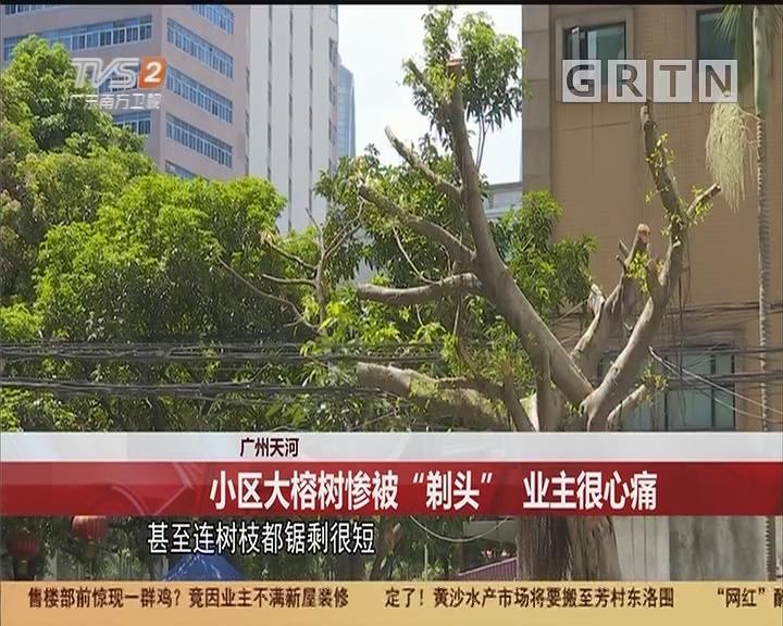 """广州天河:小区大榕树惨被""""剃头"""" 业主很心痛"""