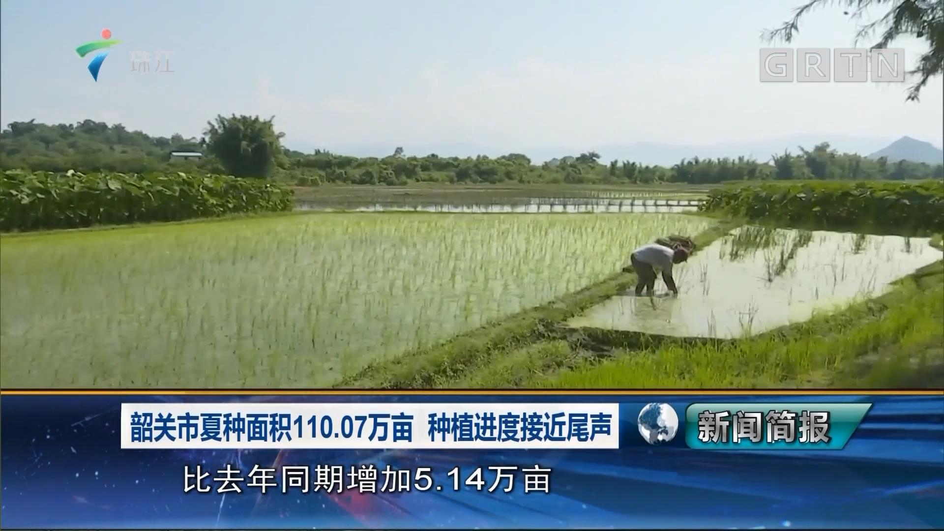 韶关市夏种面积110.07万亩 种植进度接近尾声