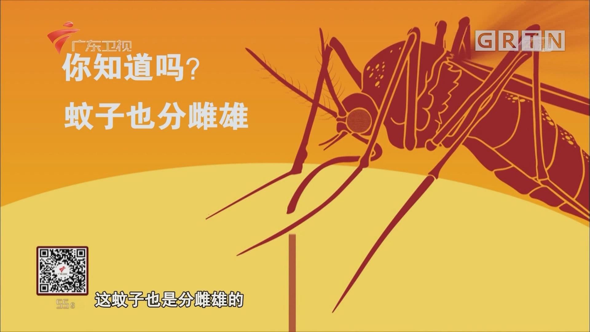分辨雌雄蚊子小妙招