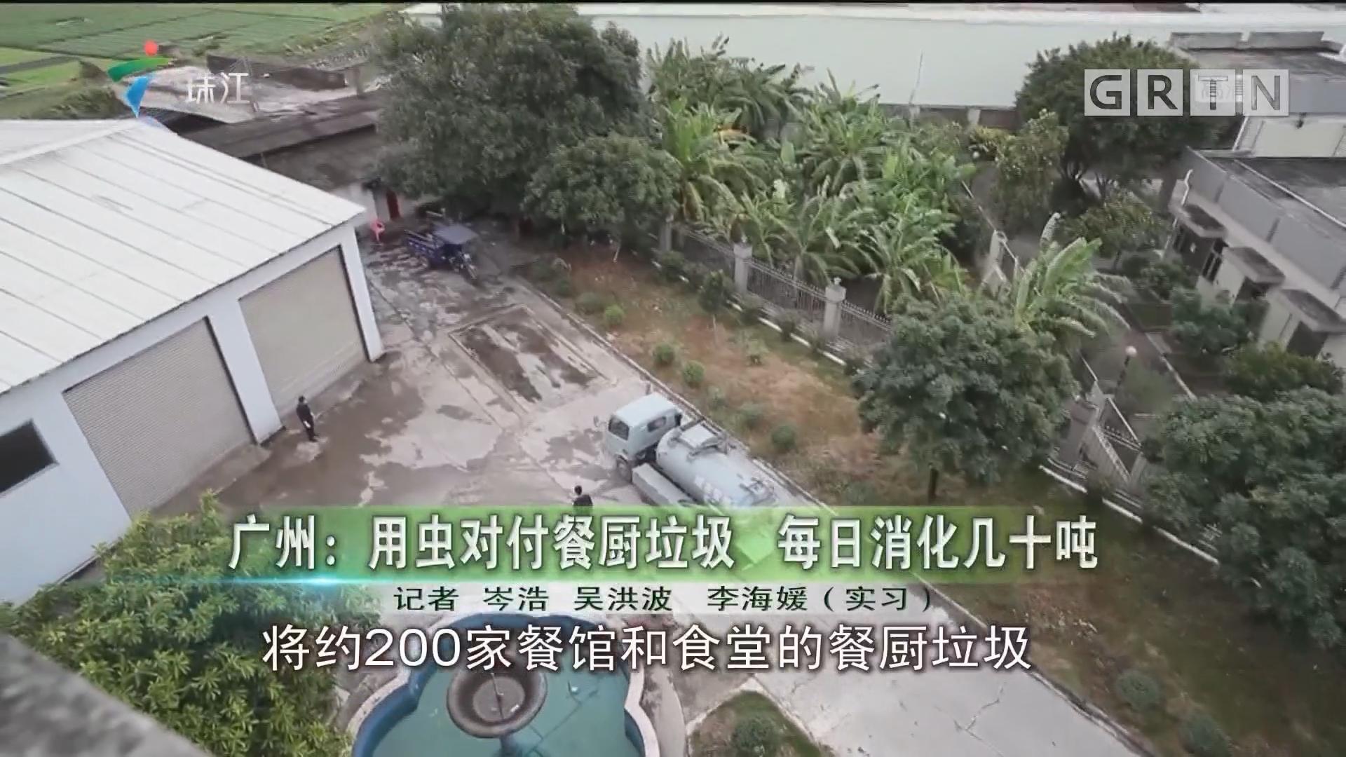 广州:用虫对付餐厨垃圾 每日消化几十吨