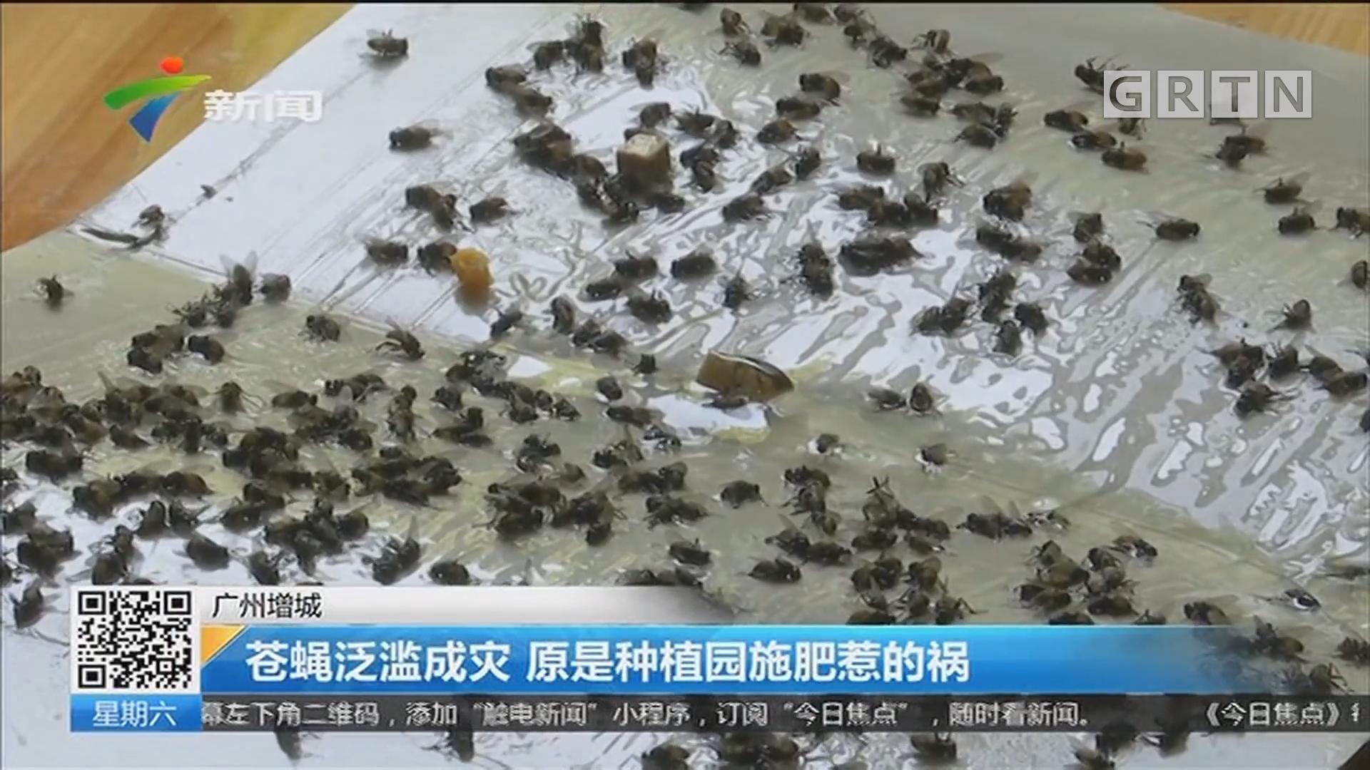 广州增城 苍蝇泛滥成灾 原是种植园施肥惹的祸