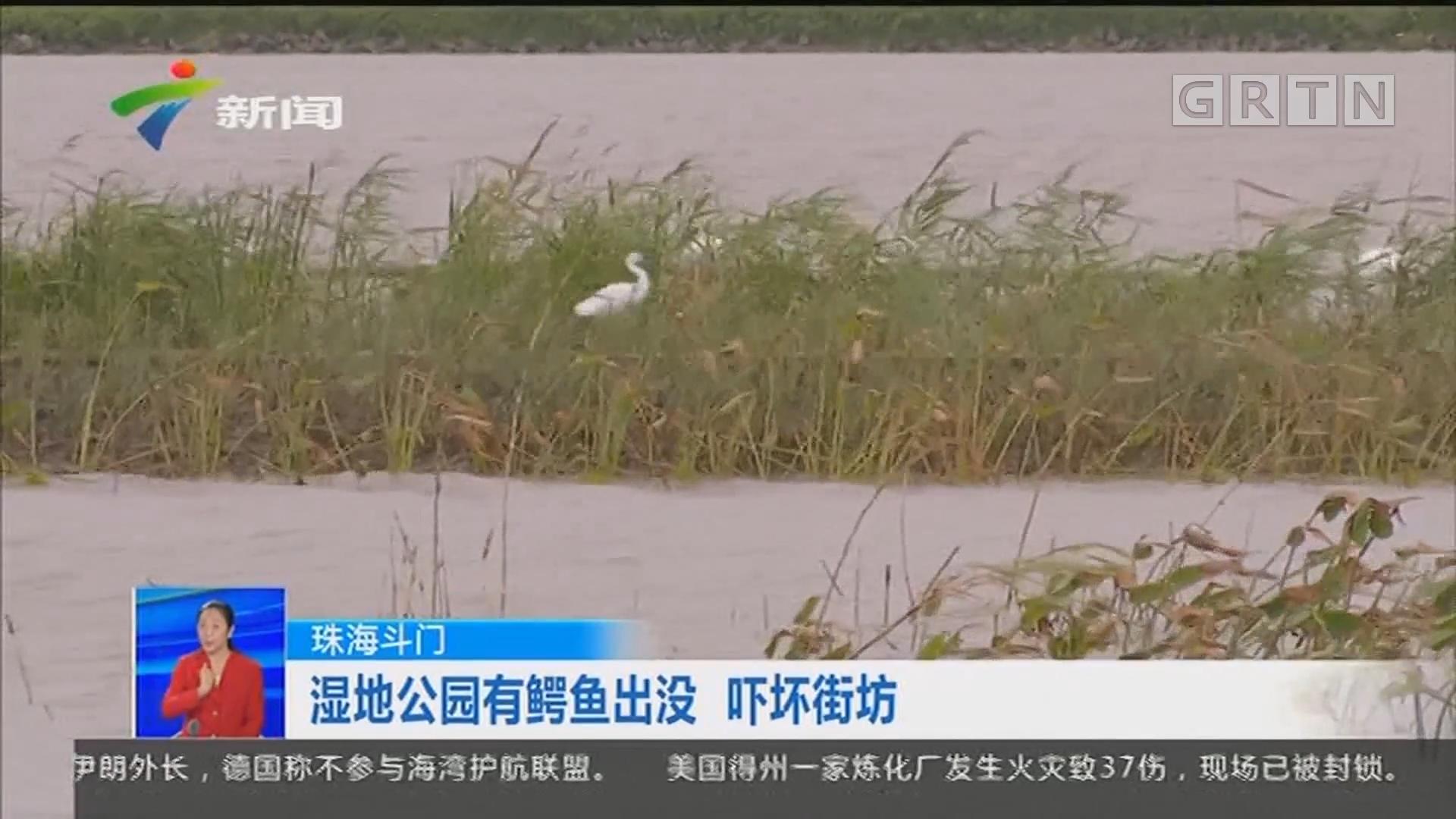 珠海斗门:湿地公园有鳄鱼出没 吓坏街坊