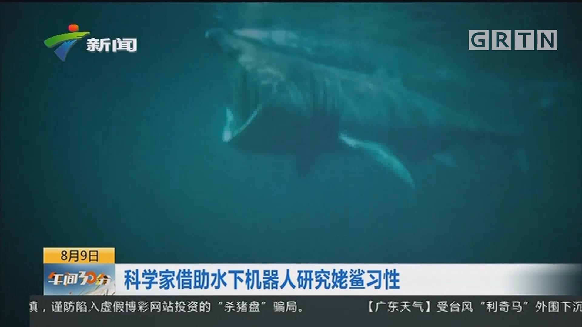 科学家借助水下机器人研究姥鲨习性