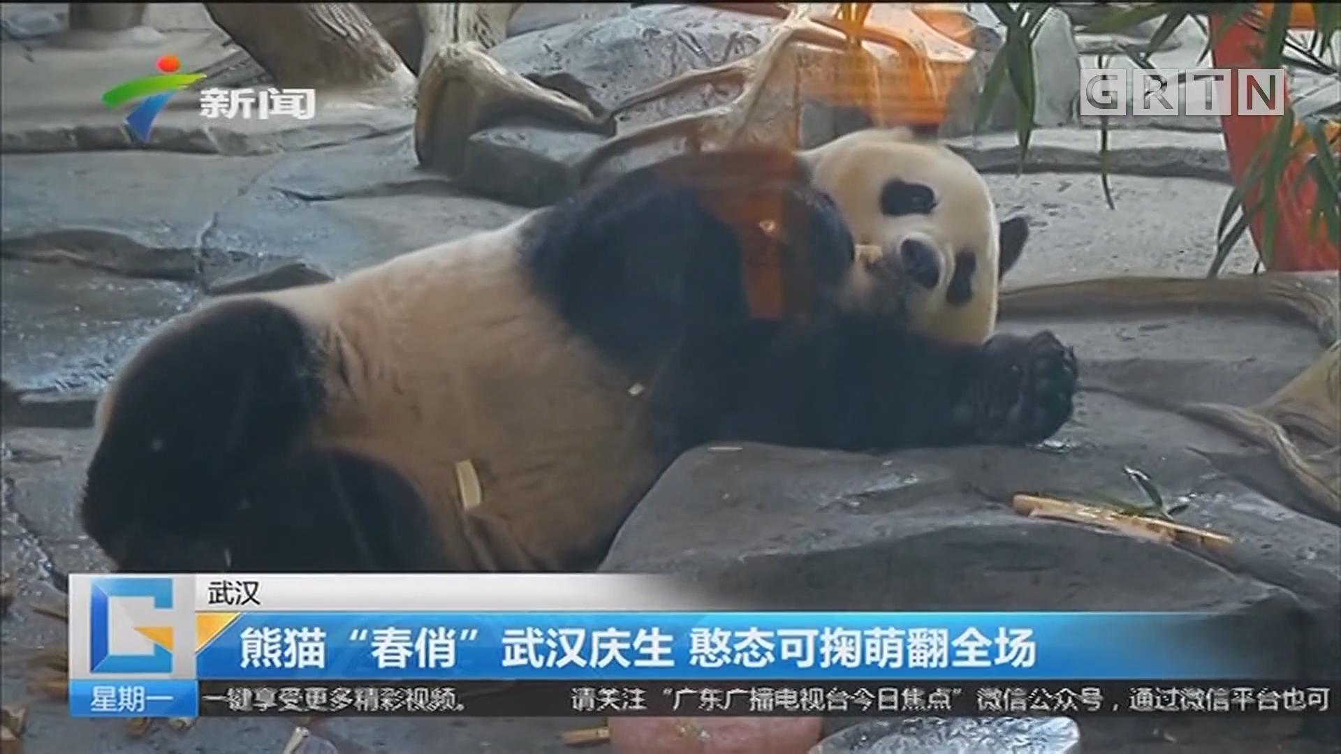 """武汉:熊猫""""春俏""""武汉庆生 憨态可掬萌翻全场"""