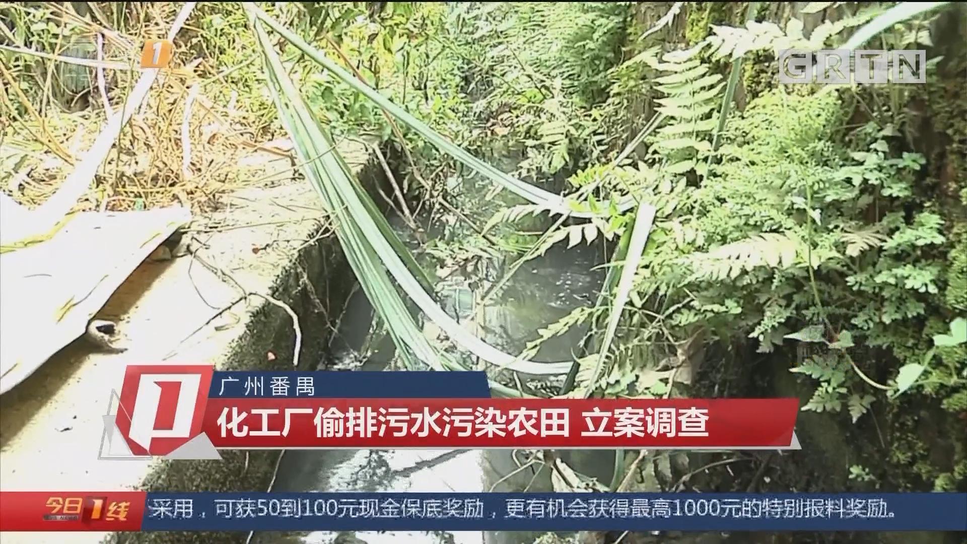 广州番禺:化工厂偷排污水污染农田 立案调查