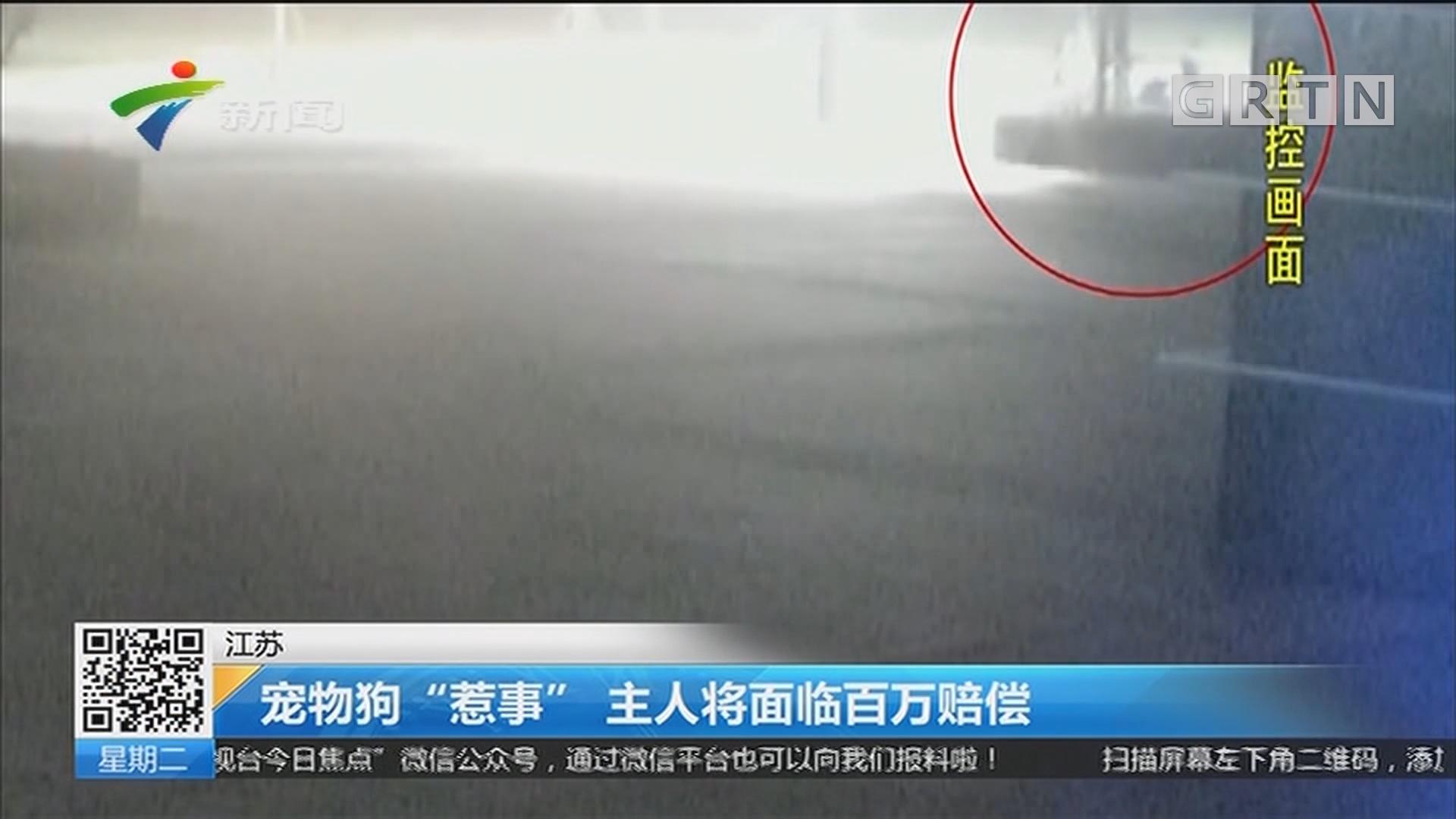 """江苏:宠物狗""""惹事"""" 主人将面临百万赔偿"""