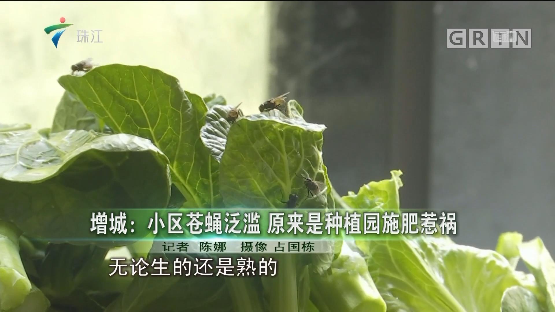 增城:小区苍蝇泛滥 原来是种植园施肥惹祸