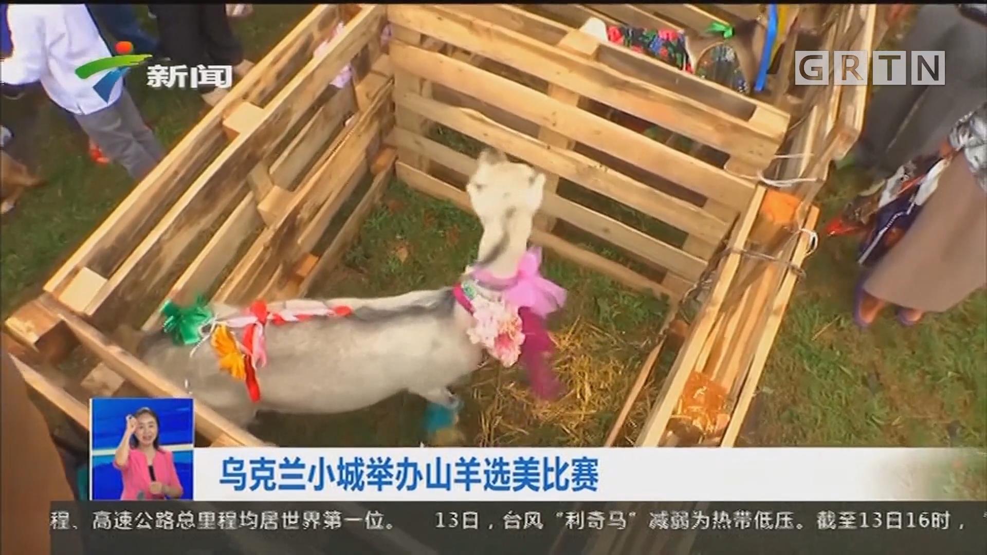 烏克蘭小城舉辦山羊選美比賽