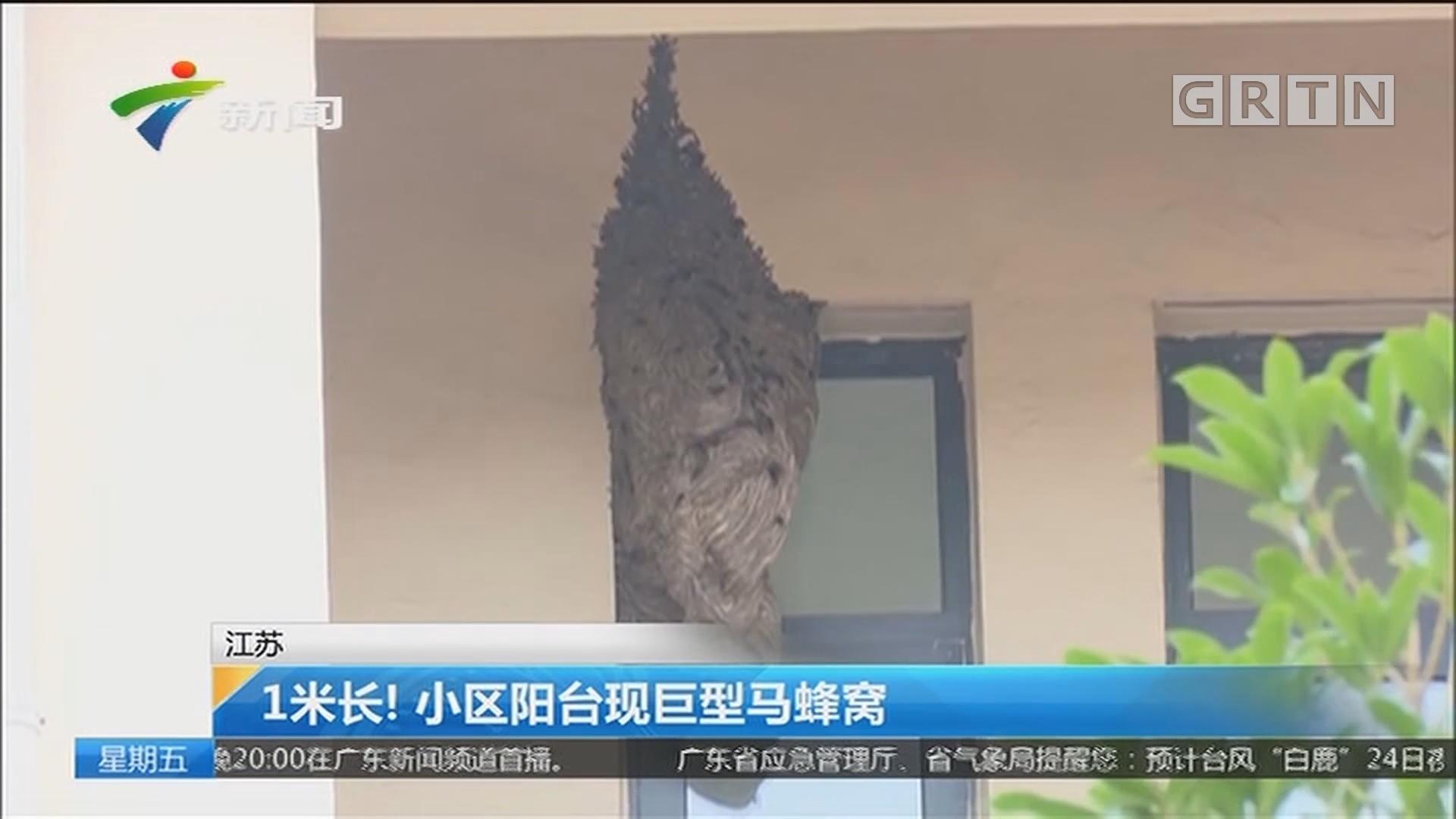 江苏:1米长!小区阳台现巨型马蜂窝