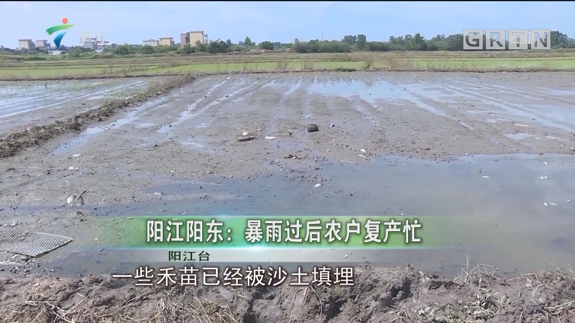 阳江阳东:暴雨过后农户复产忙