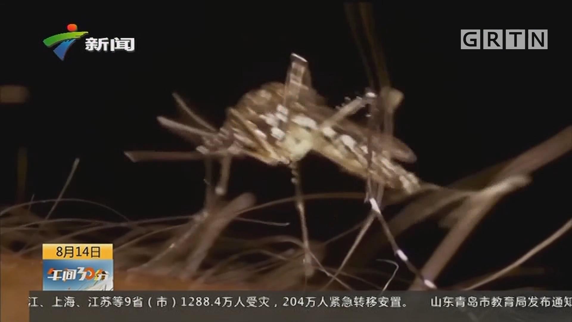 """中山大学灭蚊研究登上《自然》:用""""绝育蚊子""""控制登革热"""