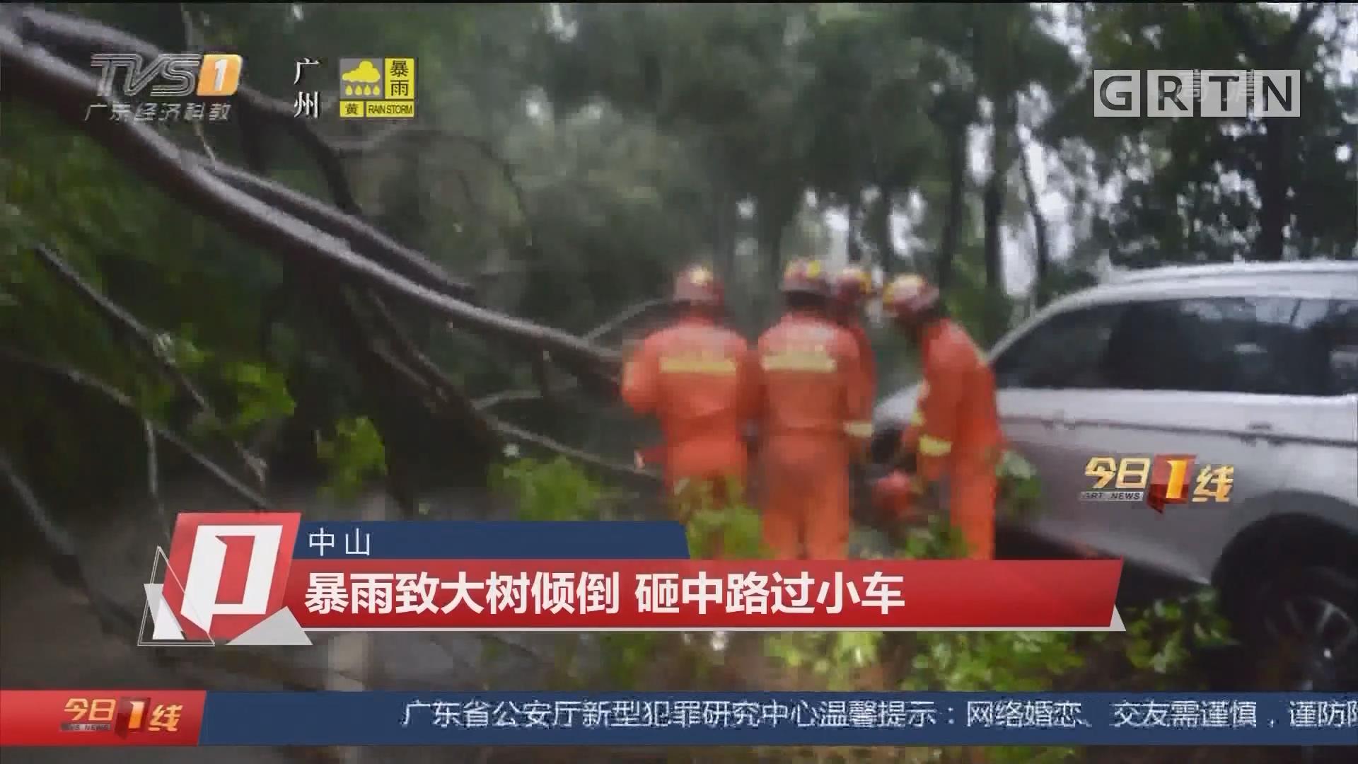 中山:暴雨致大树倾倒 砸中路过小车