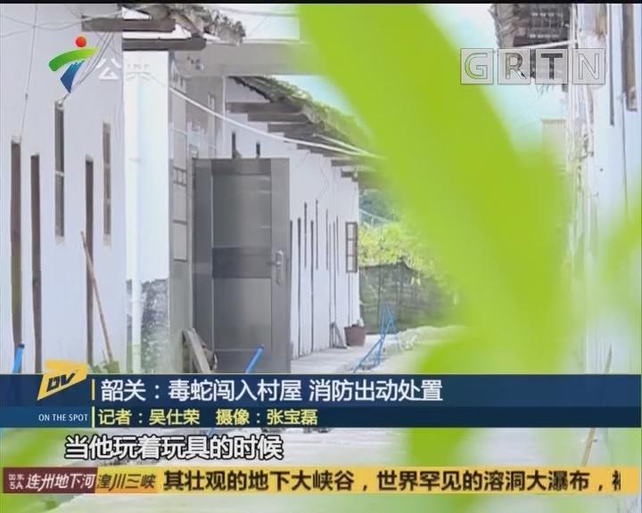 韶关:毒蛇闯入村屋 消防出动处置