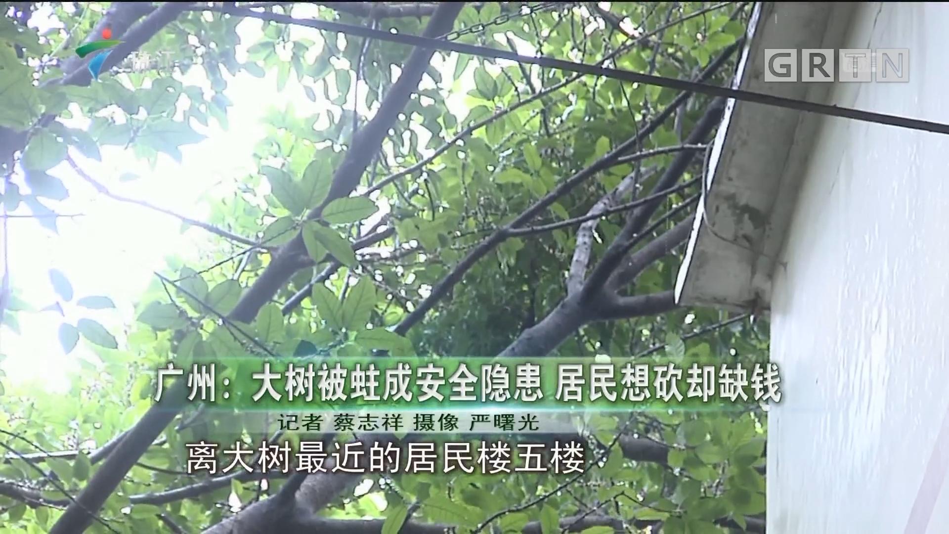 广州:大树被蛀成安全隐患 居民想砍却缺钱