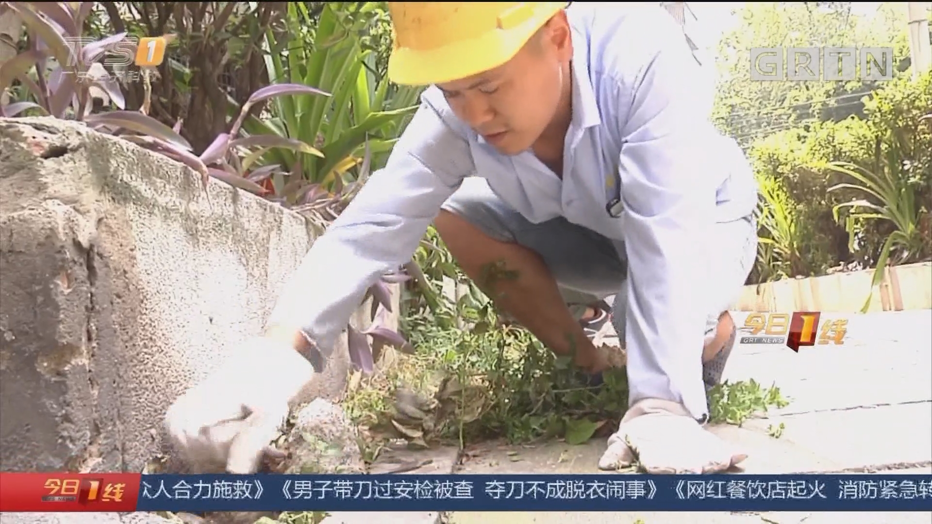 防控登革热:广州 每周五下午 全市统一灭蚊