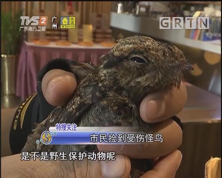 市民捡到受伤怪鸟(二)