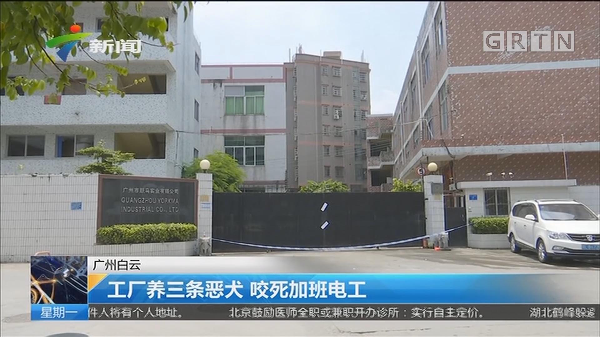 广州白云:工厂养三条恶犬 咬死加班电工