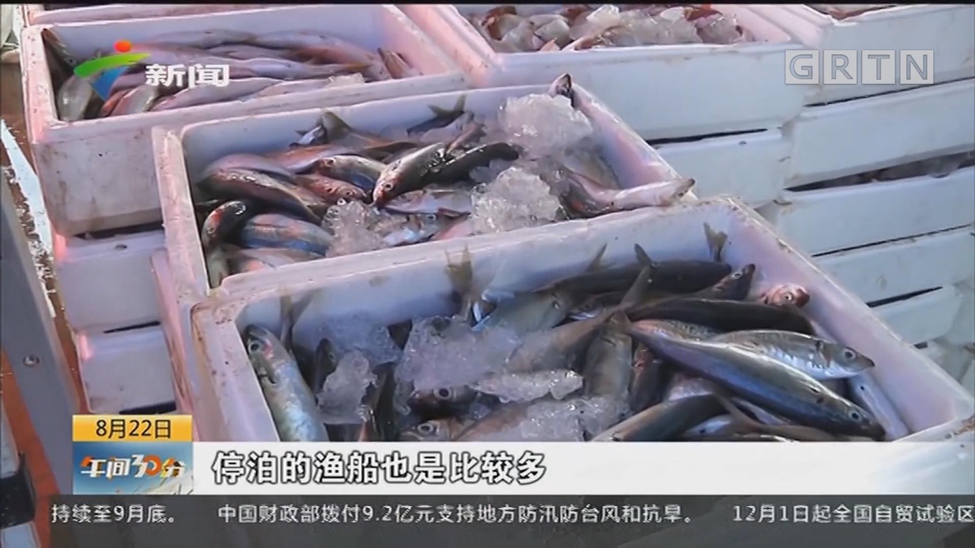 珠海:满载而归 洪湾中心渔港喜迎首批渔船回港