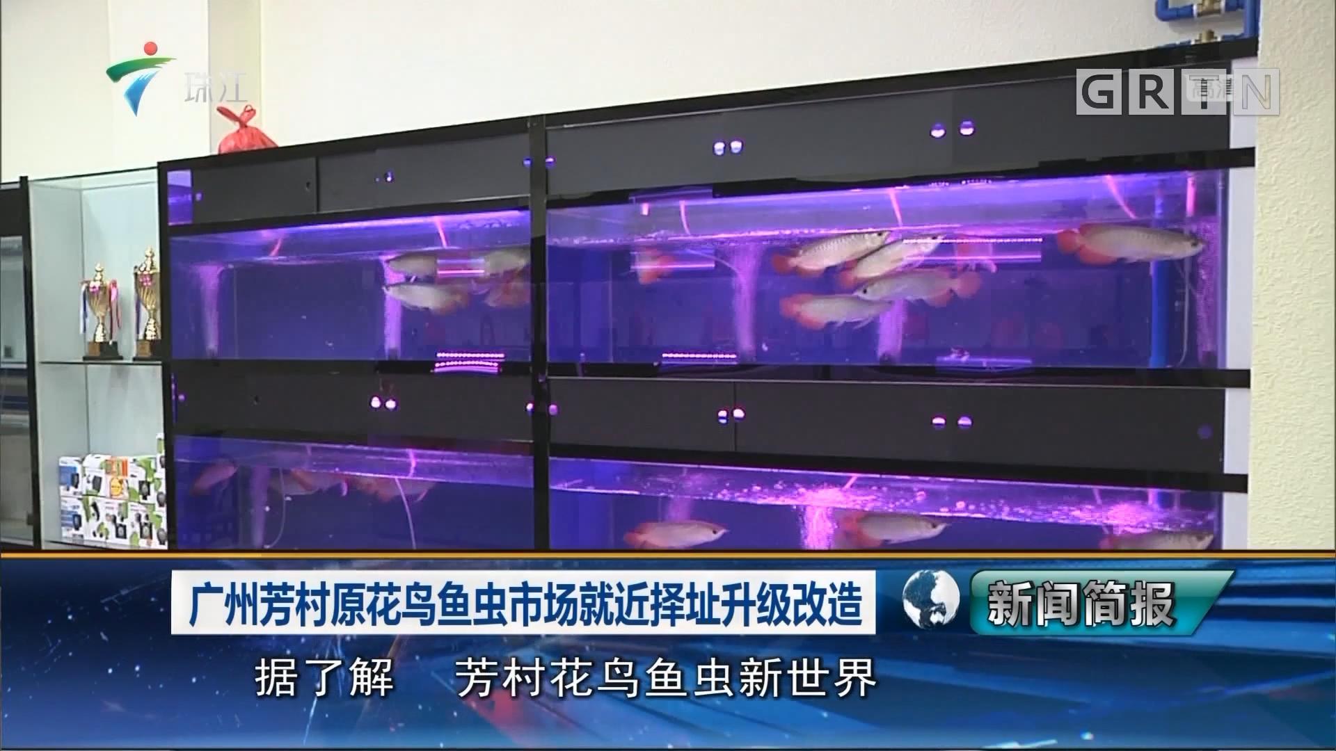 广州芳村原花鸟鱼虫市场就近择址升级改造