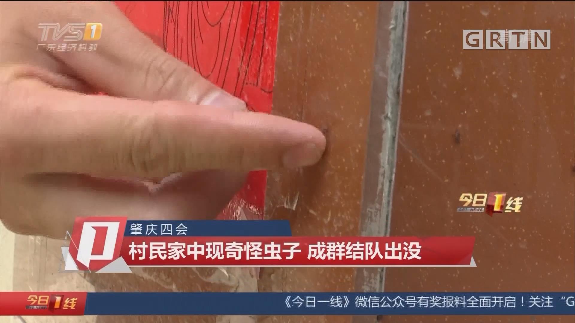 肇庆四会:村民家中现奇怪虫子 成群结队出没