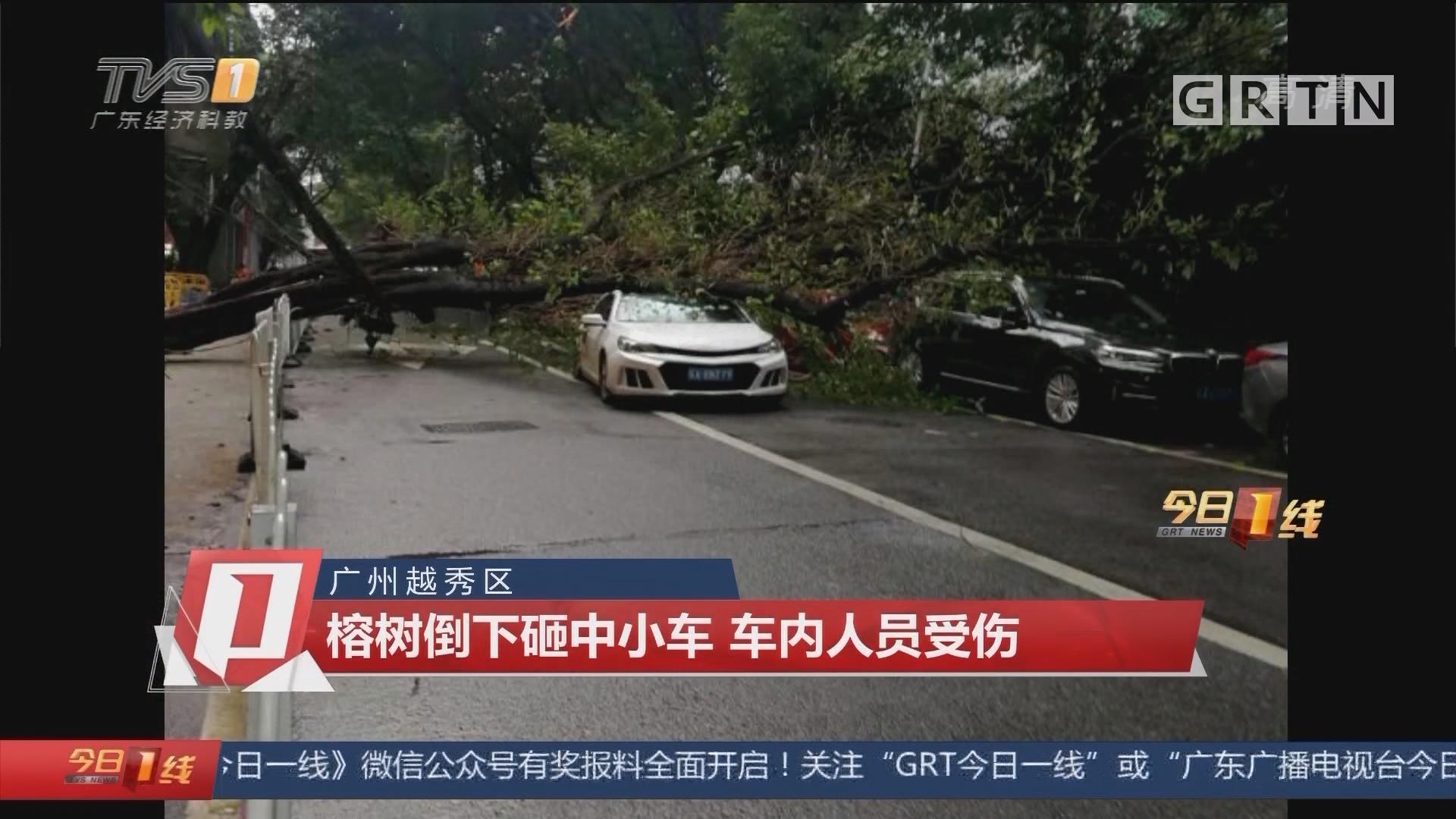 广州越秀区:榕树倒下砸中小车 车内人员受伤