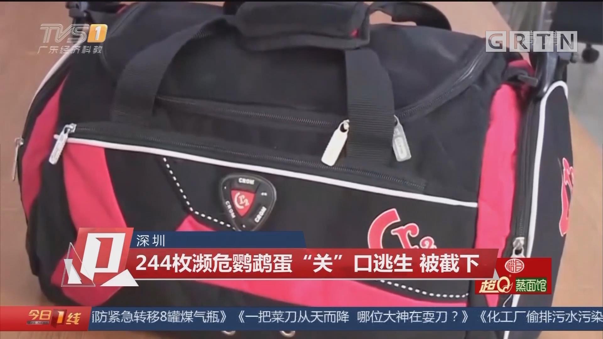 """深圳:244枚濒危鹦鹉蛋""""关""""口逃生 被截下"""