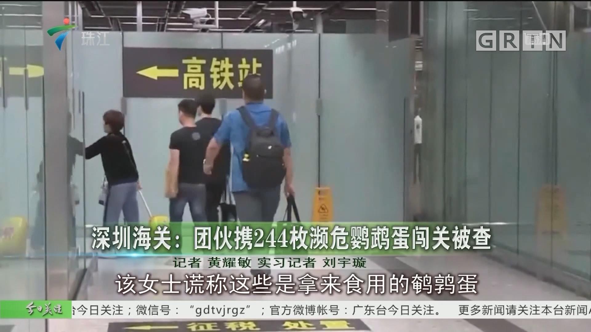 深圳海关:团伙携244枚濒危鹦鹉蛋闯关被查