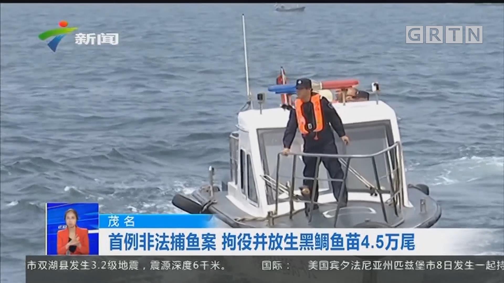 茂名:首例非法捕鱼案 拘役并放生黑鲷鱼苗4.5万尾