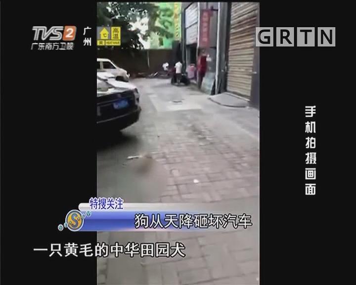 狗从天降砸坏汽车