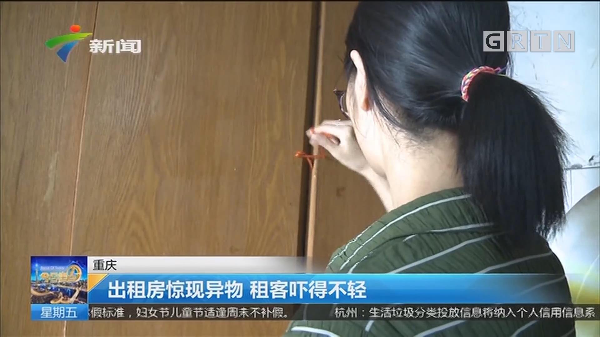 重庆:出租房惊现异物 租客吓得不轻