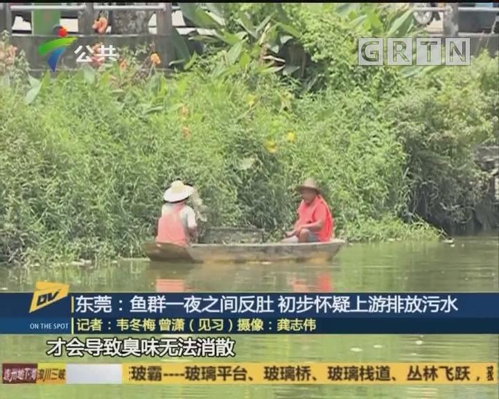 东莞:鱼群一夜之间反肚 初步怀疑上游排放污水