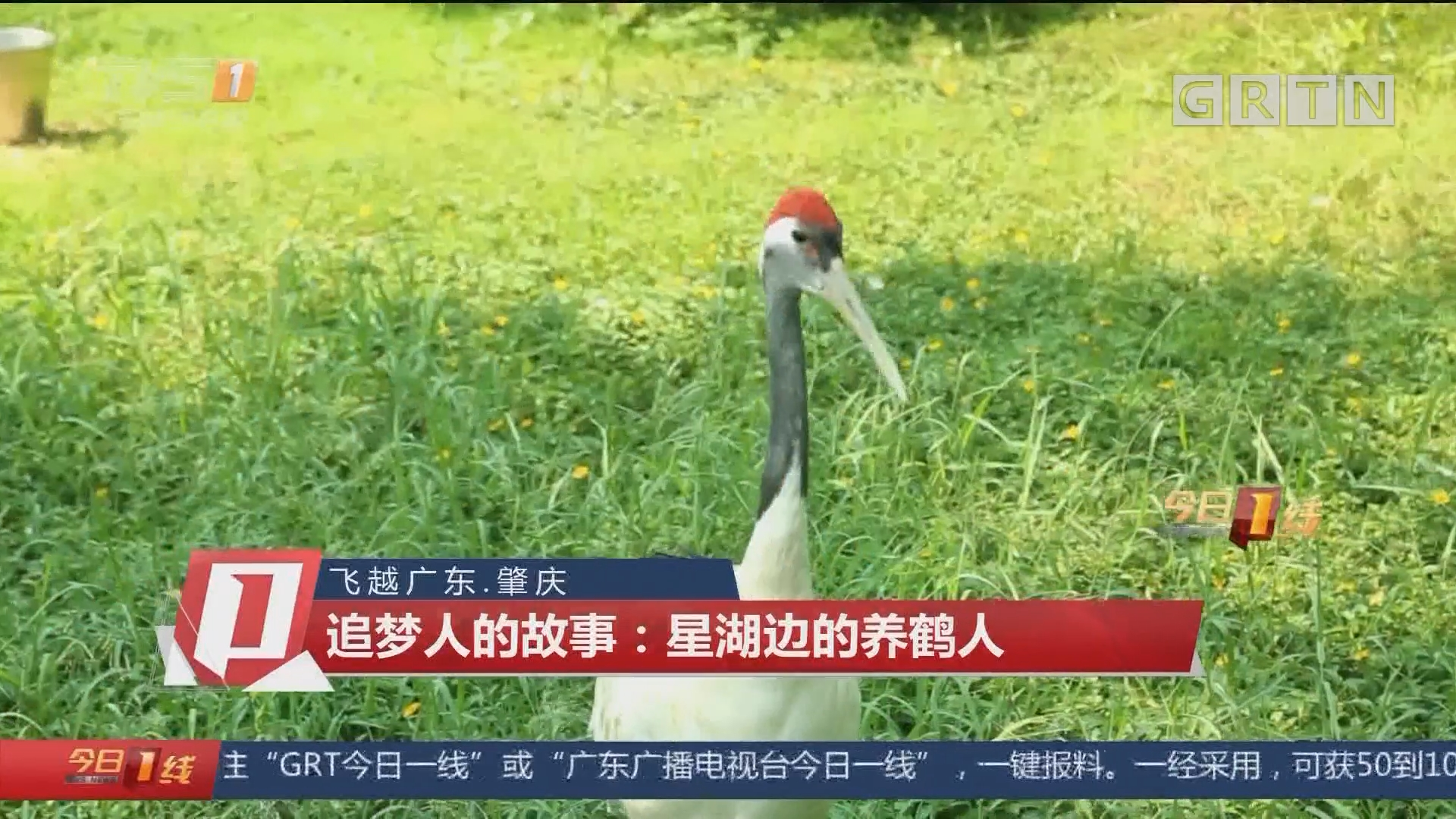 飞越广东:肇庆 追梦人的故事:星湖边的养鹤人