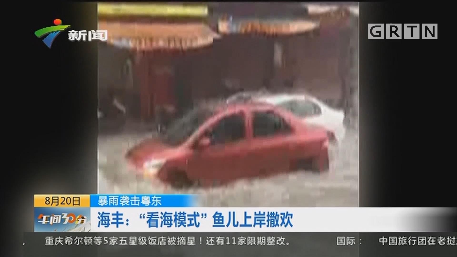 """暴雨袭击粤东 海丰:""""看海模式""""鱼儿上岸撒欢"""