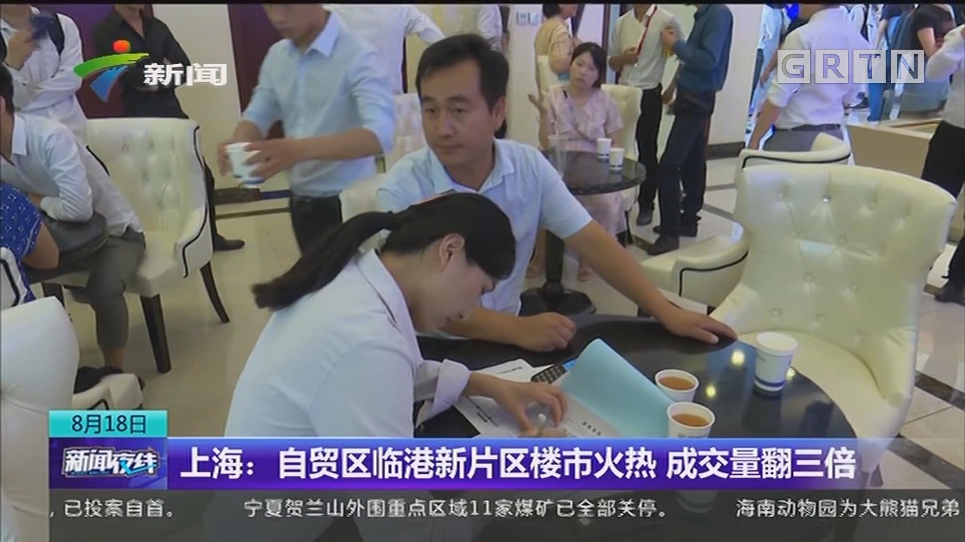 上海:自贸区临港新片区楼市火热 成交量翻三倍