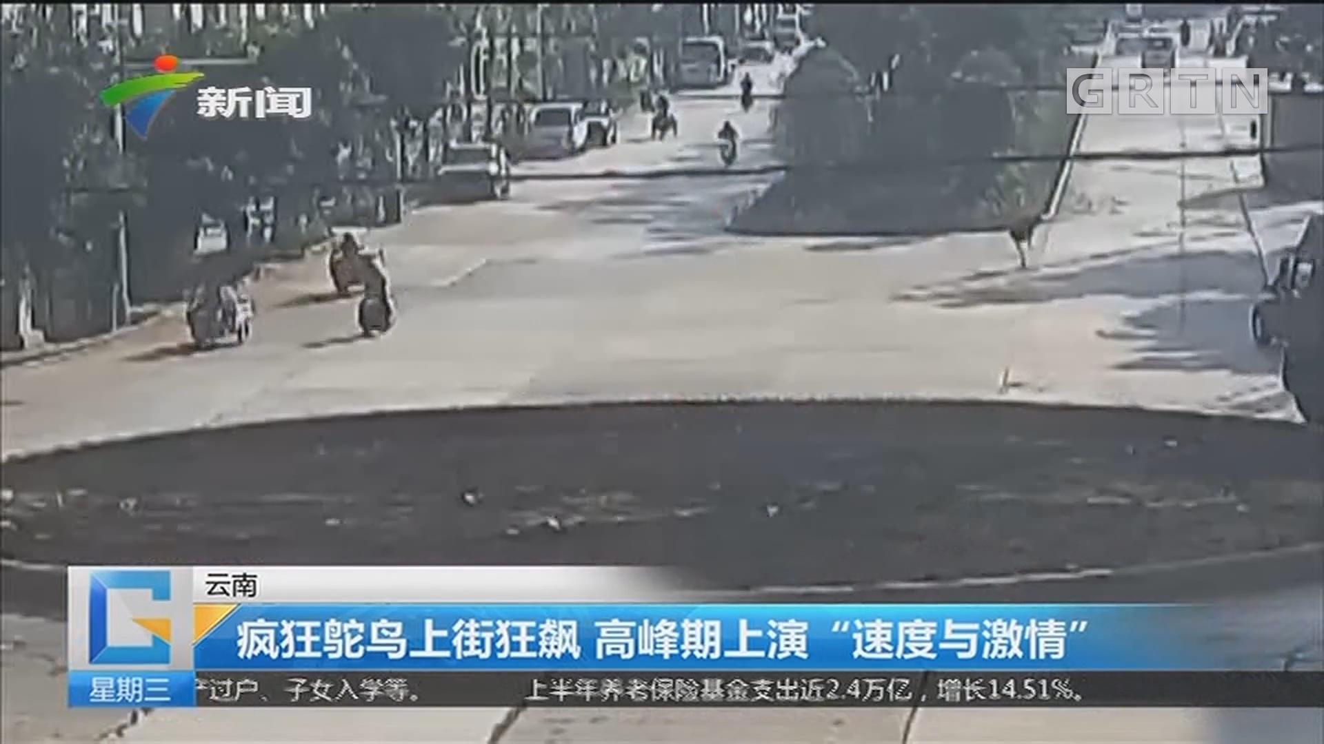 """云南:疯狂鸵鸟上街狂飙 高峰期上演""""速度与激情"""""""