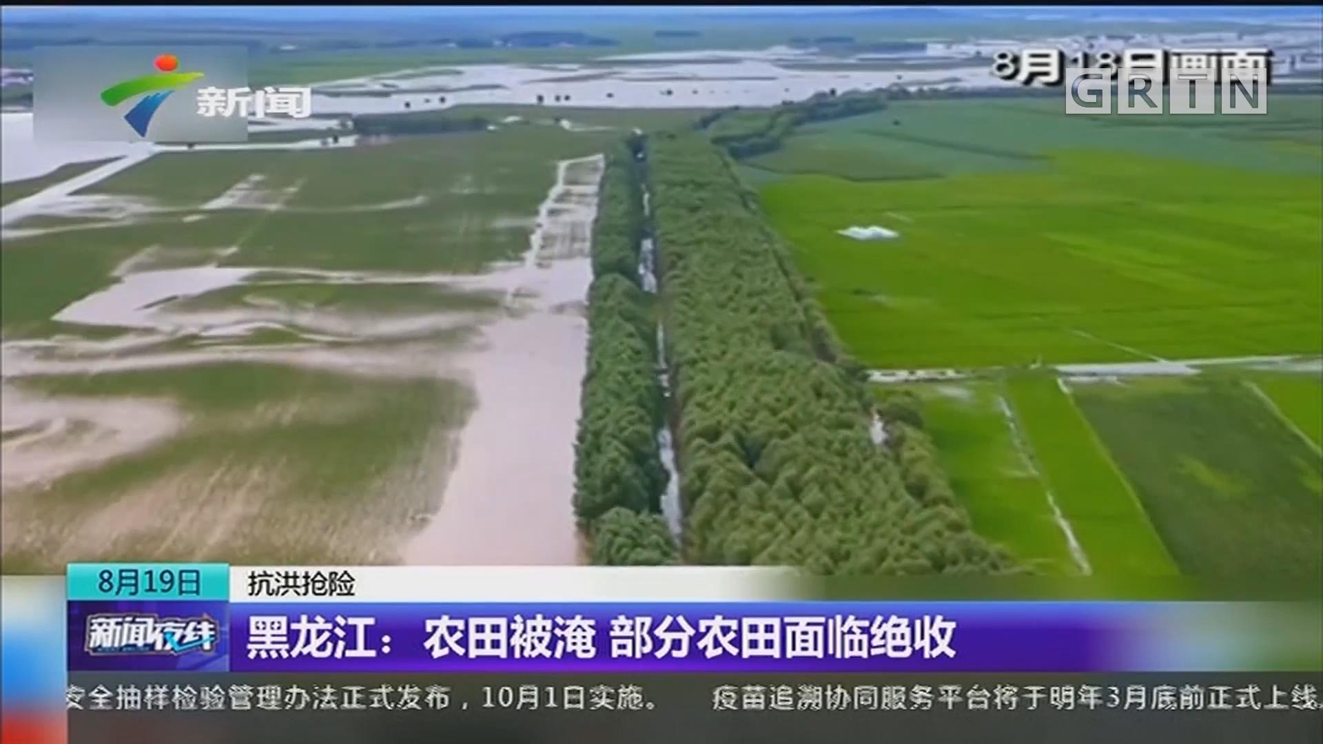 抗洪抢险 黑龙江:农田被淹 部分农田面临绝收