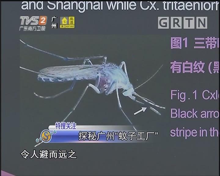 """探秘广州""""蚊子工厂"""""""