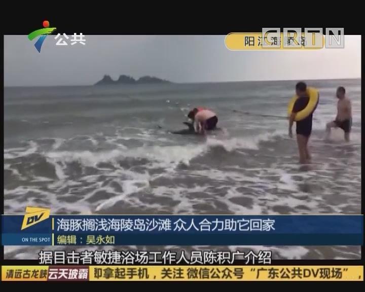 海豚搁浅海陵岛沙滩 众人合力助它回家